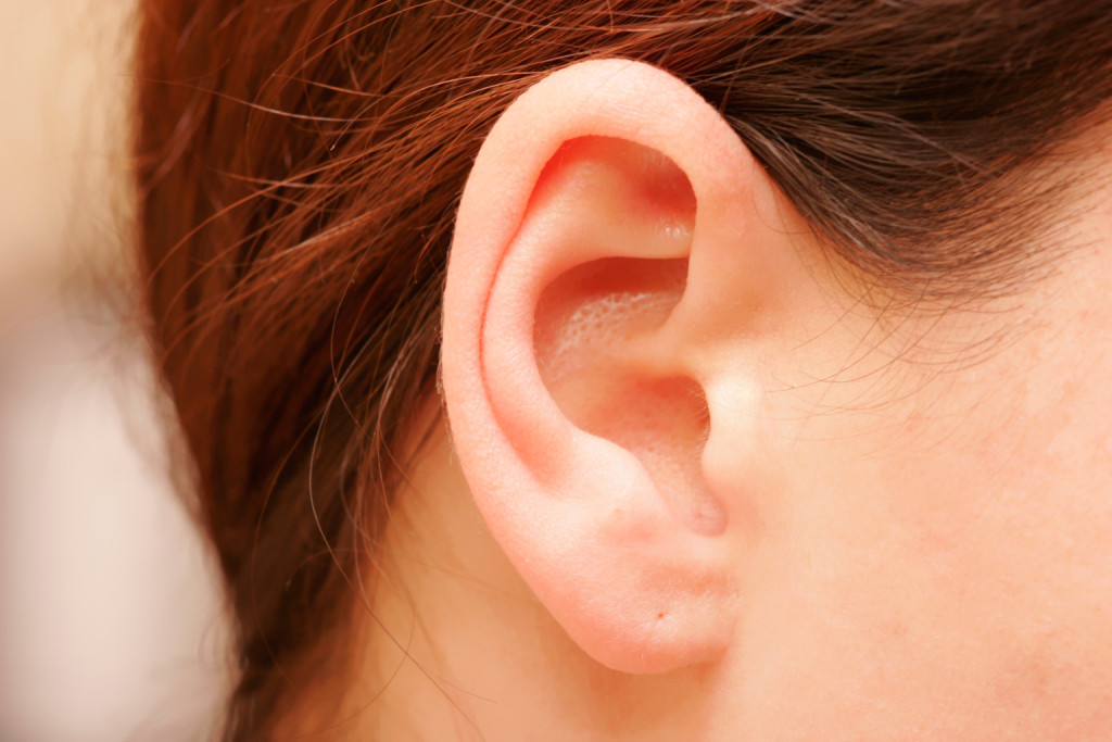 Уши – признак интеллекта и экспрессивности